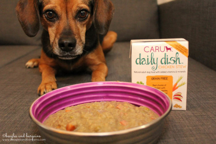 Luna ready to eat her Chicken Daily Dish Stew from Caru Pet Food