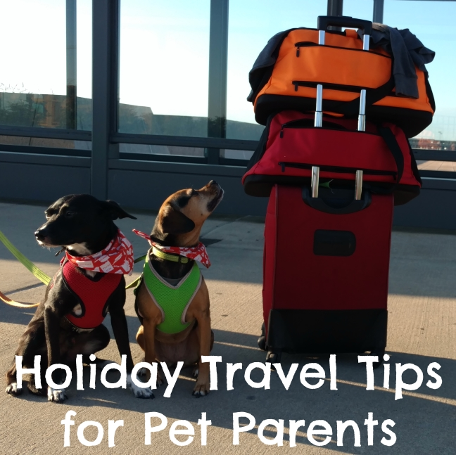 Holiday Travel Tips for Pet Parents for Both Car & Air Travel - #sponsored by Sleepypod