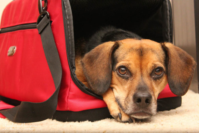 Holiday Travel Tips for Pet Parents for Both Car & Air Travel - Sleepypod Air carrier is let's you fly in cabin with pets