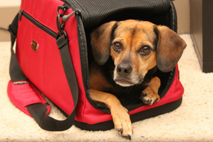Win a Sleepypod Clickit Sport or Sleepypod Air! PLUS One for Your Favorite Animal Rescue or Charity! #sponsored