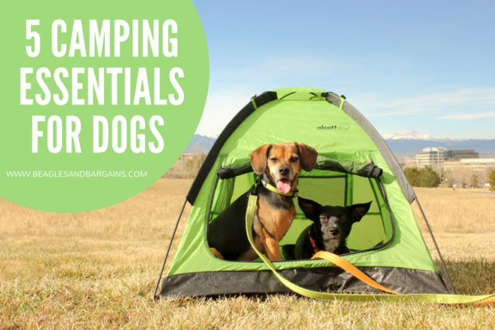 Top 5 Camping Essentials for Dogs