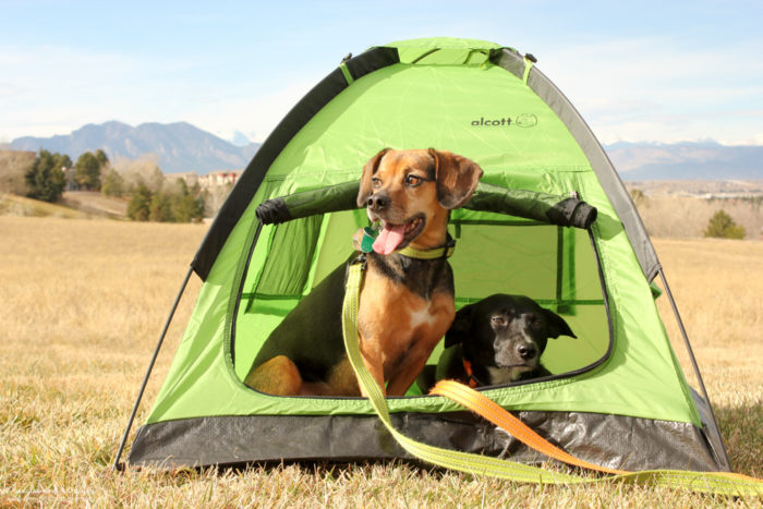 Top 5 Camping Essentials for Dogs - A Safe Place to Retreat - alcott Pup Tent