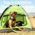 Top 5 Camping Essentials for Dogs {Stocking Stuffer Giveaway – Day #1}