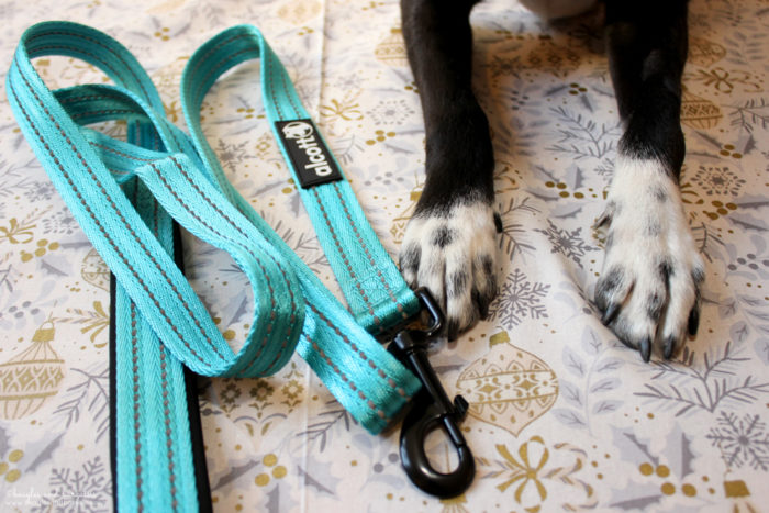Top 5 Camping Essentials for Dogs - Quality Dog Leash & Collar - alcott