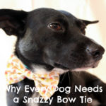 Why Every Dog Needs a Snazzy Bow Tie {Stocking Stuffer Giveaway – Day #10}