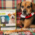 8 Causes for Holiday Anxiety in Dogs {Stocking Stuffer Giveaway – Day #6}