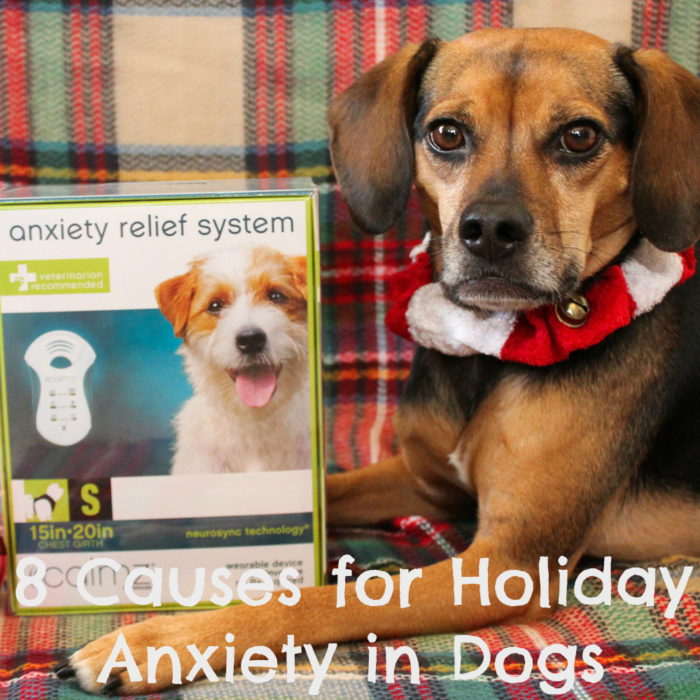 8 Causes for Holiday Anxiety in Dogs | Stocking Stuffer Giveaways | #sponsored by Petmate