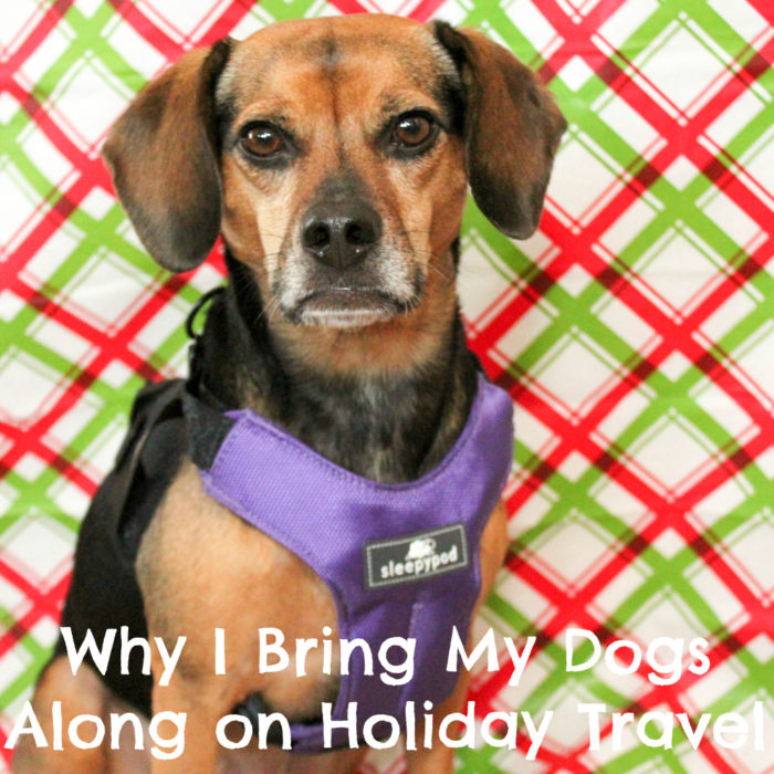 Why I Bring My Dogs Along on Holiday Travel #sponsored by Sleepypod