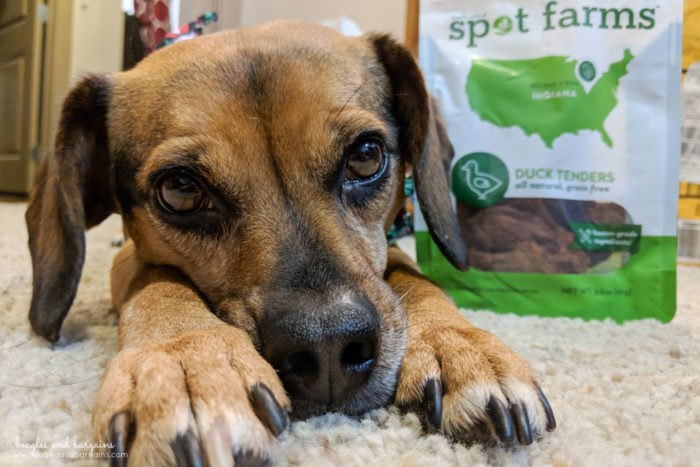 New Activities to Try with Your Dog in 2018 | Stocking Stuffer Giveaways | #sponsored by Spot Farms