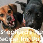 Easy Shepherd's Pie Recipe for Dogs