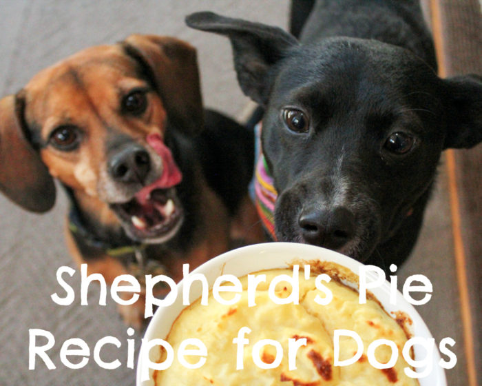 Shepherd's Pie Recipe for Dogs - Sponsored by Caru - Featuring Daily Dish Stews