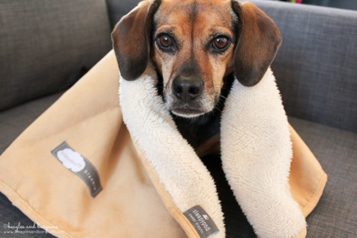Tips to Keep Your Pets Warm & Safe This Winter {cold weather, snow, ice} - Sponsored by Sleepypod