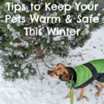 Tips to Keep Your Pets Warm and Safe During the Winter