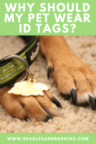 Why Should My Pet Wear ID Tags? | #sponsored by Sleepypod | {dog, cat, pet, lost dog, id tag}