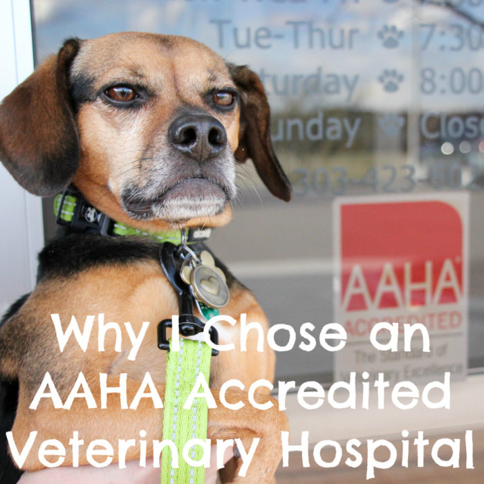Why I Chose an AAHA Accredited Veterinary Hospital {dogs, cats, vet office, health} #sponsored by AAHA
