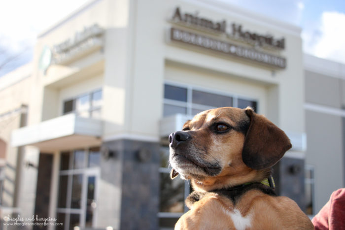 Why I Chose an AAHA Accredited Veterinary Hospital - Aspen Arbor Animal Hospital in Broomfield, CO {dogs, cats, vet office, health} #sponsored by AAHA