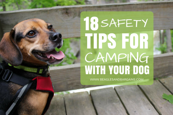 18 Safety Tips For Camping with Your Dog - #sponsored by Sleepypod - {hiking, outdoors, pet safe}