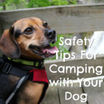 18 Safety Tips For Camping with Your Dog