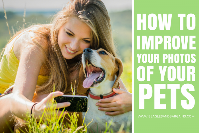 How to Improve Your Photography of Your Pets - 16 Actionable Tips! #sponsored by BlogPaws