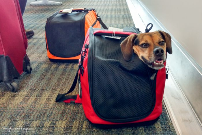 The Ultimate Packing List for Flying With Your Dog {For Beginners} | #sponsored by Sleepypod | Dogs, Airplane, Pet Friendly, What to Bring | Sleepypod Air