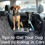 6 Quick Tips to Get Your Dog Accustomed to Riding in Your Car {Stocking Stuffer Giveaway – Day #2}