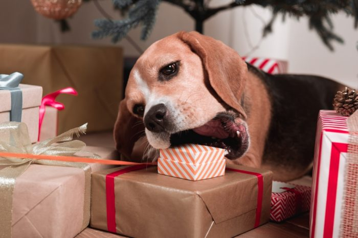 Holiday Safety Tips for Pets | Foods to Avoid | Holiday Tips | Christmas Dog | Dog Mom | Poisonous Plants | #sponsored by Sleepypod | Depositphotos | @AndrewLozovyi