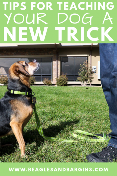 6 Tips for Teaching Your Dog a New Trick | Stocking Stuffer Giveaways | Win a Full Moon Dog Treat Prize Pack | #sponsored by Full Moon