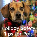 Holiday Safety Tips for Pets + PRINTABLE