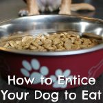How to Entice Your Dog to Eat {Stocking Stuffer Giveaway – Day #10}