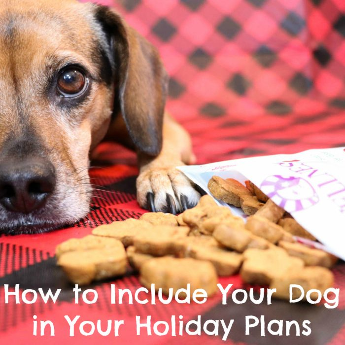 How to Include Your Dog in Your Holiday Plans | Stocking Stuffer Giveaways | Win Wellness Gingerbread Crunchy WellBars & Gingerbread Soft WellBites | #sponsored by Wellness